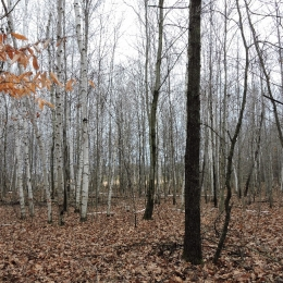 Owner of this woodlot worked with the Shiawassee Conservation District to develop and implement a Forest Management Plan.